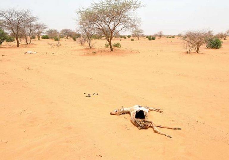D'ici à 2070, un tiers de l'humanité pourrait vivre dans des endroits aussi chauds que le Sahara